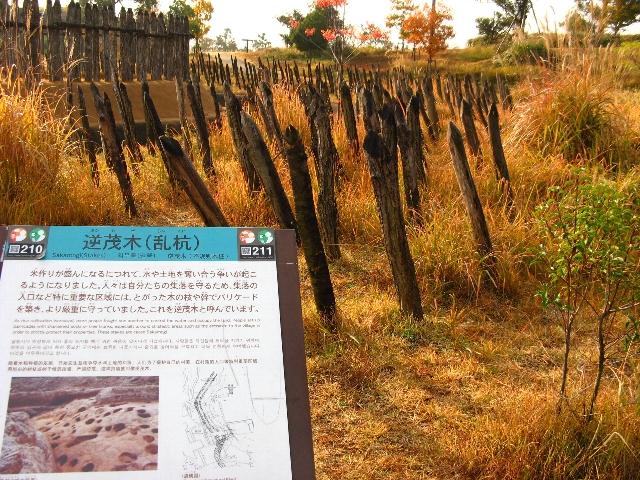 081204_sakamogi