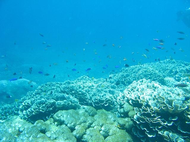 090506_nusapenida_diving04