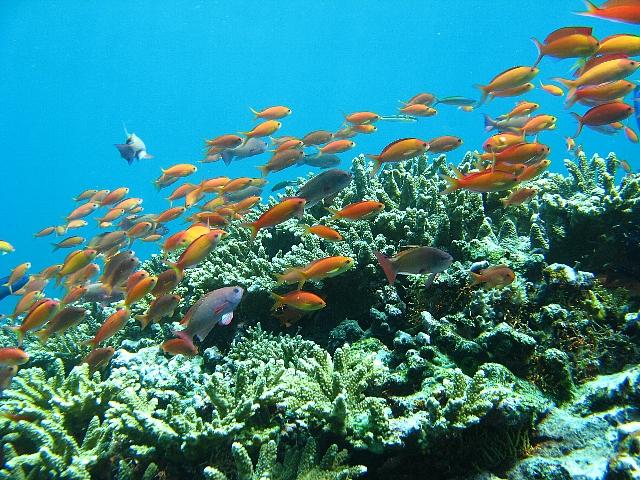 090506_nusapenida_diving06
