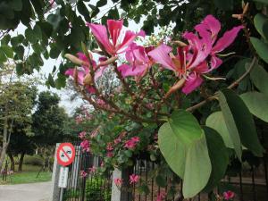 20110213_sweet_flower