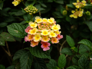 20110213_yellow_flower