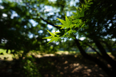120729_green02