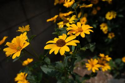120811_flower_01