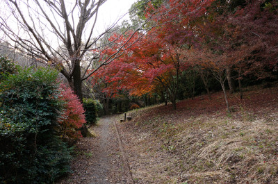121125autumn_at_koshi_03