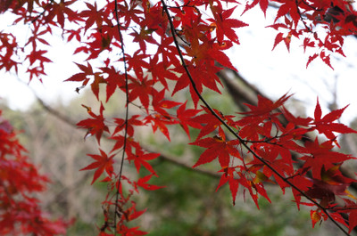 121125autumn_at_koshi_04
