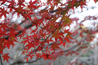 121125autumn_at_koshi_05_2