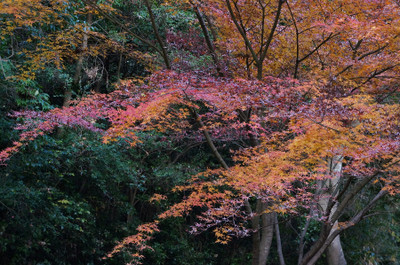 121125autumn_at_koshi_10