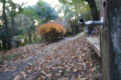 121125autumn_at_koshi_11