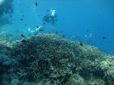 20130531_diving02