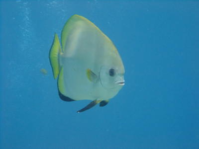 20130531_diving07