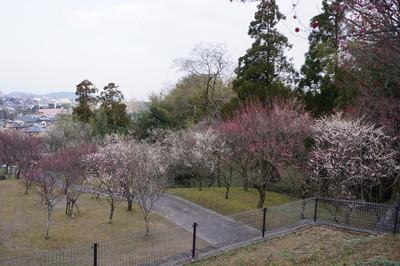 160227_hyaku_bai_en05