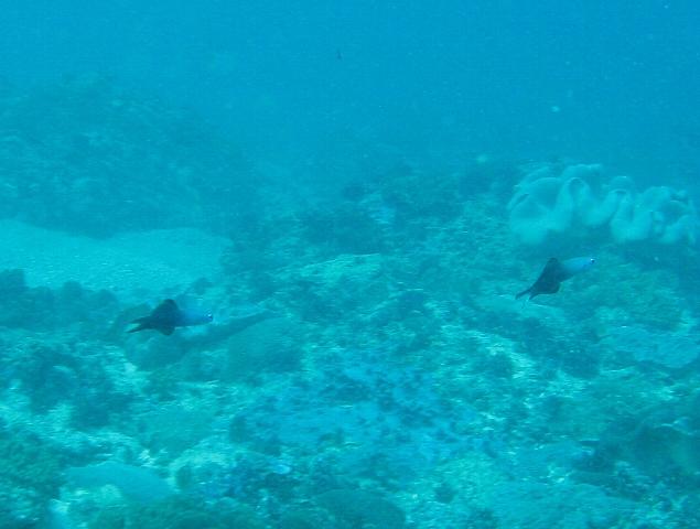 090506_nusapenida_diving01