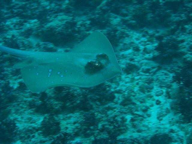090506_nusapenida_diving02