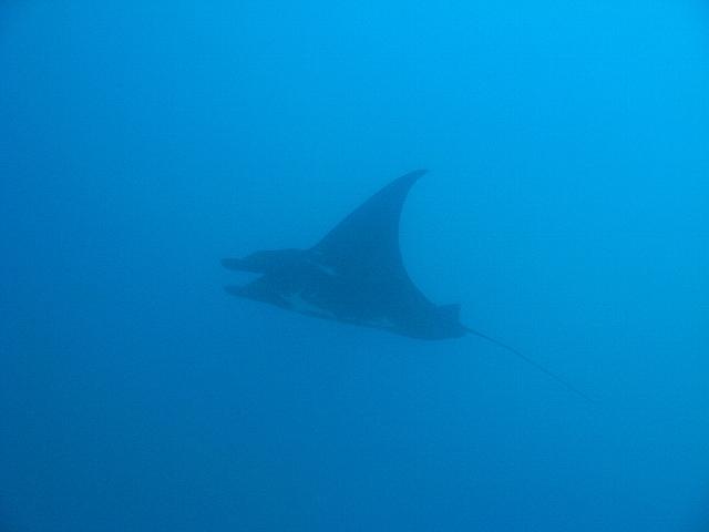 090506_nusapenida_diving03