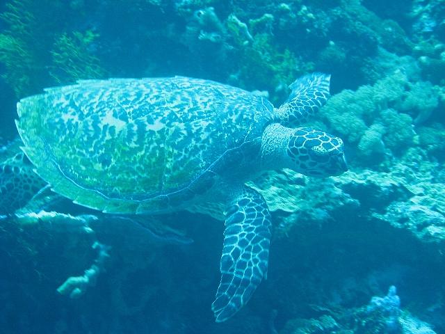 090506_nusapenida_diving05