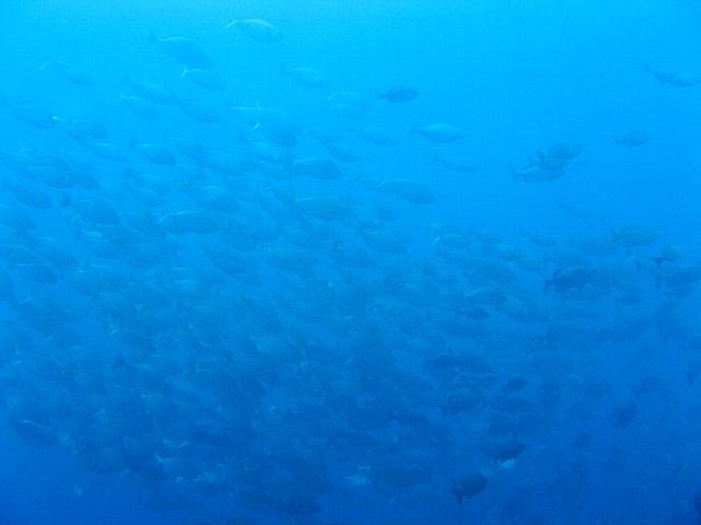 090506_nusapenida_diving07