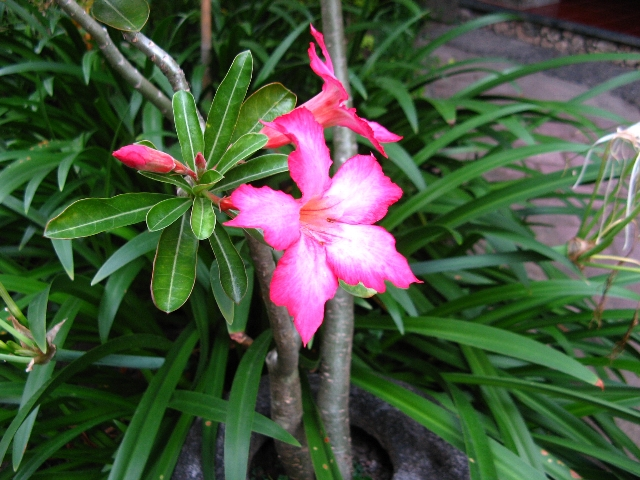 090908bali_flower